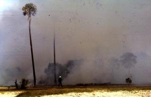 Bush fire at Pelican