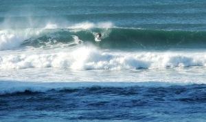 Redhead surfer 9-4-6-11