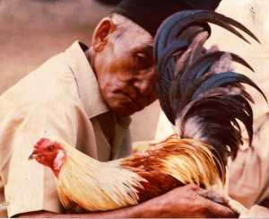 Bali 1977 Man with Rooster