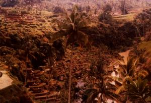 Bali Rice Fields 1977