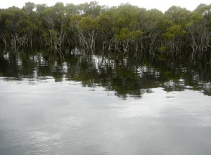 Black Neds Bay Mangroves  27-10-11