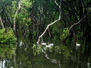 Black Neds Bay Ducks 8-12-11