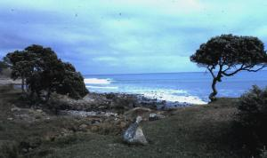 New Zealand Raglan