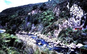 New Zealand Stream