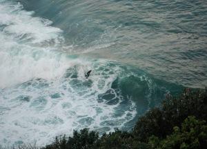 Redhead Bluff surfer 11-08-11
