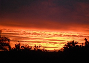 Redhead Sunset 10-01-12