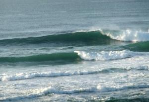 Redhead surf 1-10-11