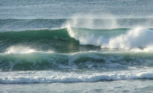 Redhead surf 3-1-10-11