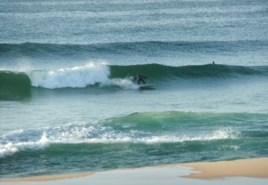 Redhead surfer 24-10-11