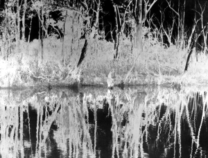 Redhead Swamp Reflections