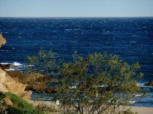 Redhead windy 20-09-11