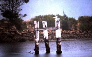 Thirsty Pelican Camden Haven