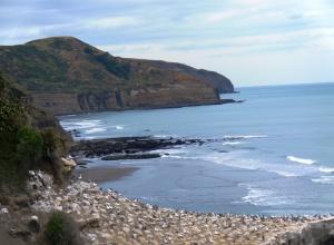 New Zealand coast 2014