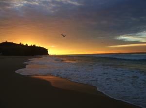 Redhead Beach Gold 23-06-14