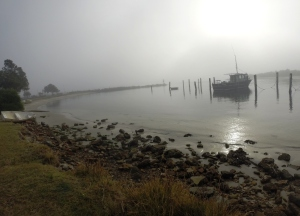 Foggy Morn Black Neds Bay 09/08/2014
