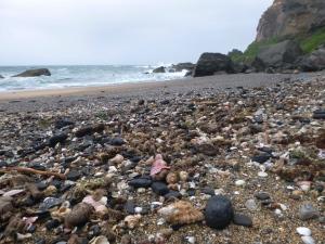 Shelly Beach Redhead  20-10-14