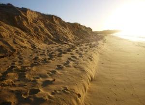 Nay beach Redhead 06-05-14