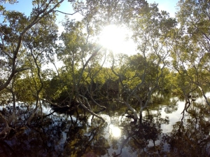 Black Neds Bay Mangroves 02-07-15
