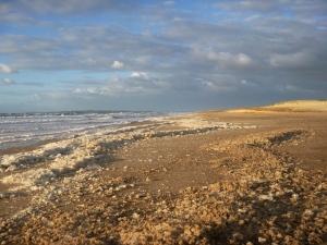 Foam on Redhead Beach 16-01-16